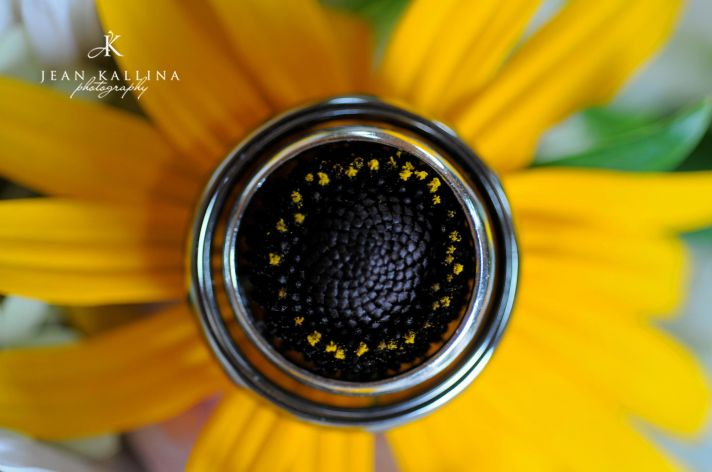 Bride and grooms wedding bands photographed on yellow sunflower