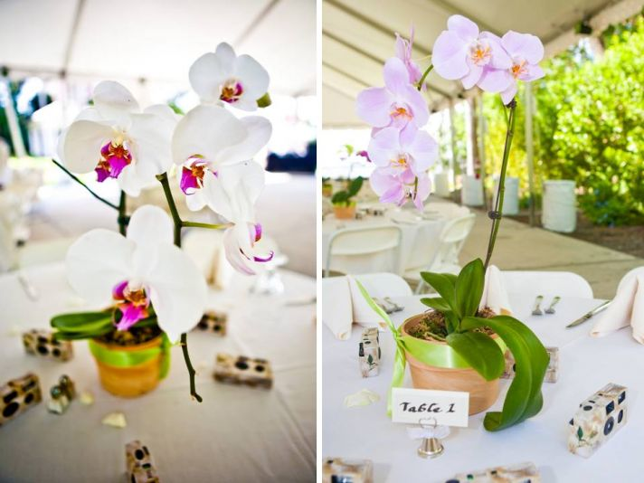 Beautiful white orchids arranged in clay pots for wedding reception table centerpieces