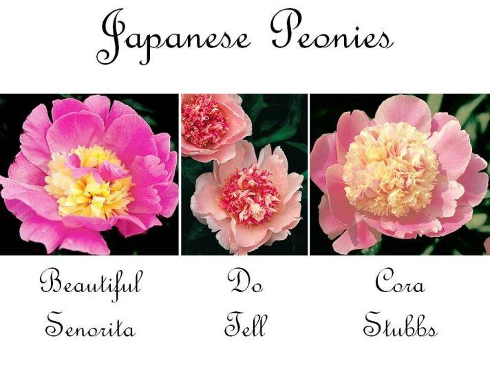 Exotic Japanese peony wedding flowers