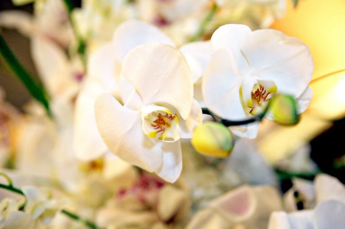 Elegant and classic ivory orchid bridal bouquet for chic downtown Baltimore, Maryland wedding
