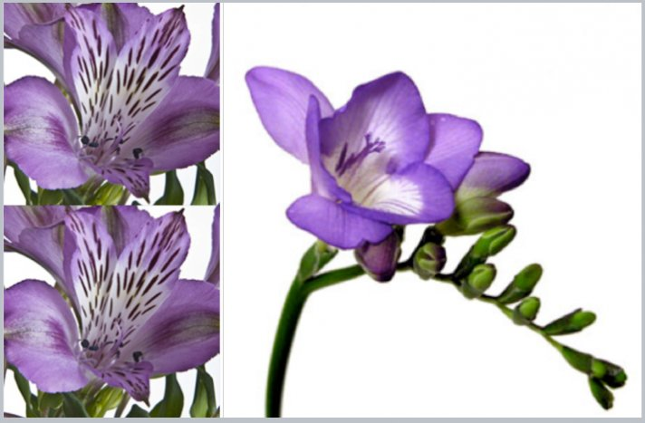 Purple freesia wedding flowers