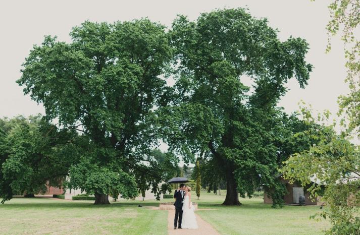 green wedding inspiration bride groom kiss under tree