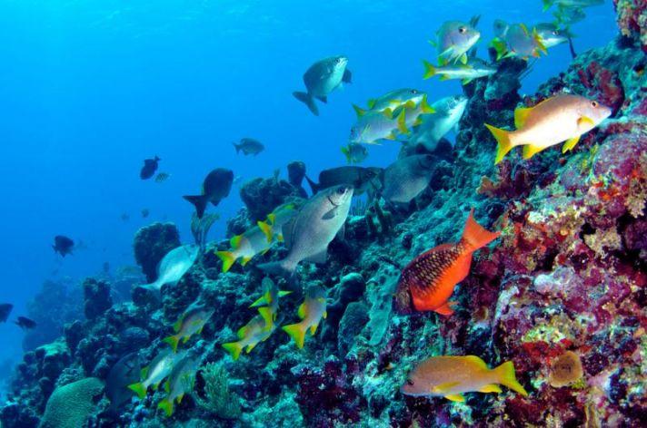 underwater adventure for Bermuda honeymooners