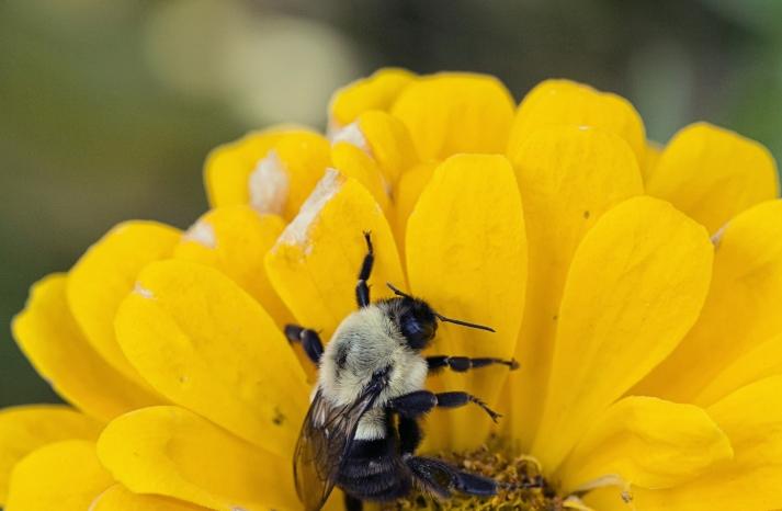Bee ring shot
