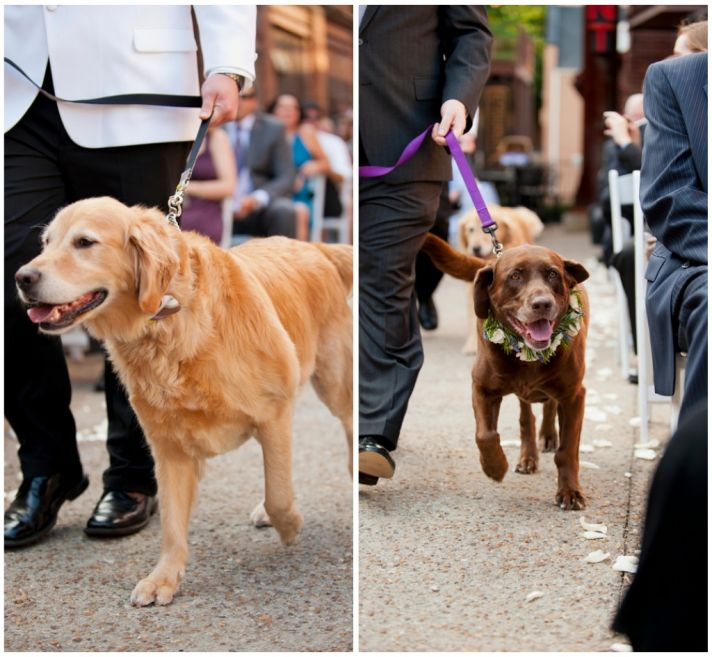 Dog ring bearers for the ceremony
